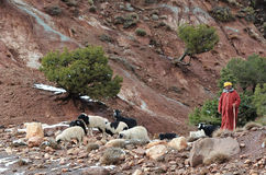 7 berber moroccan Fotografia Royalty Free