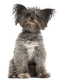 7 blandade gammala sittande år för avelhund Royaltyfri Bild