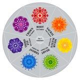 7 chakras chart färgmandalas Arkivbilder