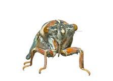7 cicada EN πρόσωπο Στοκ Φωτογραφίες