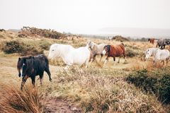 7 Horse on Green and Brown Grass Field Stock Image