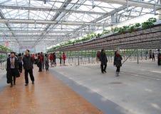 7. internationales Erdbeere-Symposium Lizenzfreie Stockfotos