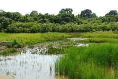 7 isonzo自然保护沼泽地 免版税图库摄影