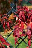 7 ivy dekoracje Obrazy Royalty Free