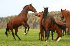7 konia Obraz Royalty Free
