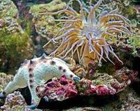 7 korali actinias Zdjęcia Royalty Free