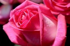 7 kwiatów Obraz Royalty Free