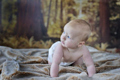 7 month old baby boy. Very happy 7 month old baby boy starting to think about crawling, with 1st teeth, wearing washable eco' nappies, in a wooded bedroom royalty free stock photo