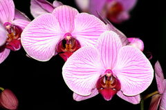 7 orchids Στοκ εικόνα με δικαίωμα ελεύθερης χρήσης