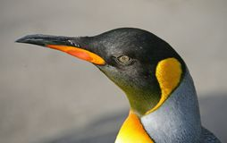 7 pingwin króla Obrazy Royalty Free