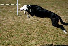 7 psów Zdjęcie Stock
