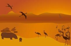 7 safari Obrazy Stock
