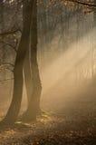 7 silhouetted trees Royaltyfri Foto