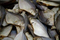 7 targ rybny Zdjęcia Stock
