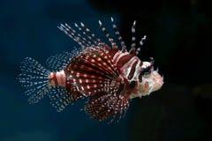 7 tropikalnych ryb Zdjęcia Royalty Free