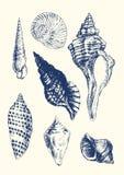 7 vari seashells Fotografie Stock Libere da Diritti