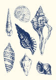 7 verschiedene Seashells Lizenzfreie Stockfotos