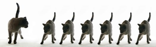 7 Vidas. Popular belief has it that cats have seven lives royalty free stock image