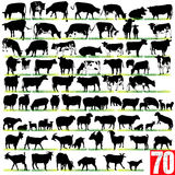 70 Dairy Cattle Silhouettes Set Royalty Free Stock Photography