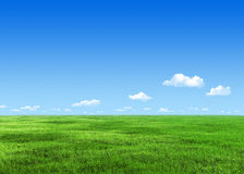 7000px green meadow Stock Photos