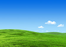 7000px nature - Green meadow template Royalty Free Stock Image