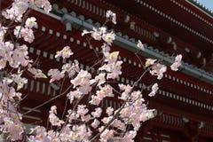 71 япония стоковое изображение rf