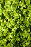 72 цветка Стоковая Фотография RF