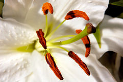 76 λουλούδια Στοκ Εικόνες
