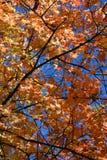 761 близкий листь вверх Стоковая Фотография