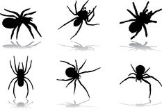77. Spiders for Halloween. Set icons - 77. Spiders for Halloween. Different spiders for your Halloween and other design Royalty Free Stock Photo