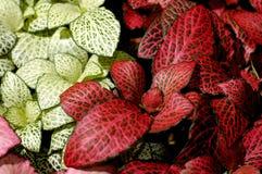 79 цветков Стоковое Изображение RF