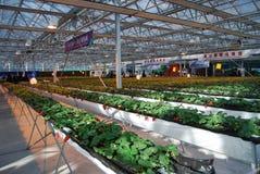 7th international Strawberry  Symposium Stock Images