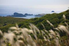 8个海岸线结构树 免版税库存图片