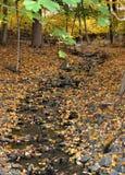 8个秋天反映 库存图片