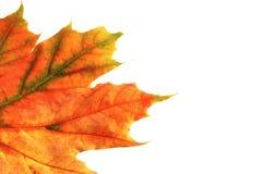 8个秋天颜色 免版税库存图片