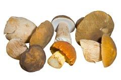 8个蘑菇 免版税库存图片