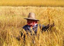 8农夫 免版税库存照片