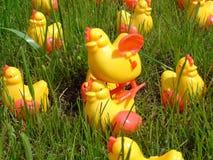 8只小鸡疯狂的塑料 库存照片