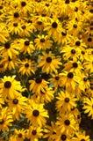 8朵五颜六色的花 免版税库存照片