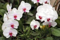 8朵兰花 库存图片