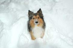 8条狗雪 库存图片