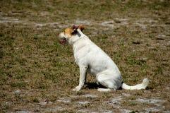 8条狗 库存照片