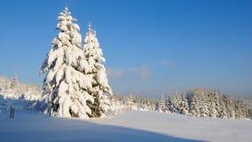 8森林没有多雪 库存照片