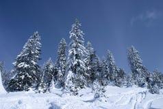 8横向冬天 免版税图库摄影