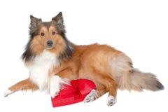 8浪漫的狗 库存图片