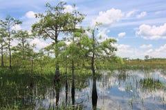8片沼泽地横向 免版税库存图片