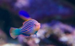 8 εξωτικά ψάρια Στοκ εικόνα με δικαίωμα ελεύθερης χρήσης
