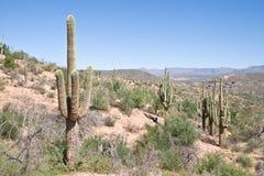 8 Аризона Стоковая Фотография RF