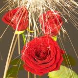 8 искр розы дождя вниз Стоковые Фотографии RF