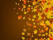 8 листьев предпосылки осени упаденных eps Стоковая Фотография